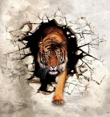 Fototapeta 3d picture tiger emerges from the destroyed wall