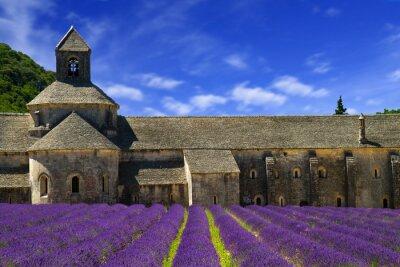 Fototapeta Abbey of Senanque and blooming rows lavender flowers. Gordes, Lu