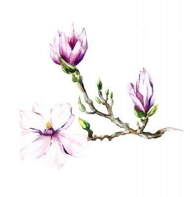 Fototapeta akwarela kwiaty magnolii odizolowane na białym tle