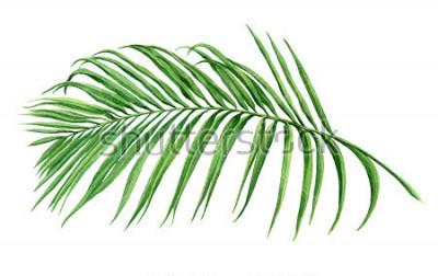 Fototapeta Akwarela malarstwo kokosowe, liście palmowe, zielone liście na białym tle. Akwarela ręcznie malowane ilustracja tropikalny egzotyczny liść na tapetę zespołu stylu Hawaii wzór. Ze ścieżki przycinając