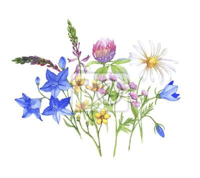 38952007329700 Fototapeta Akwarela transparent z kwiaty. Set lato łąkowe rośliny i kwiaty  na białym tle