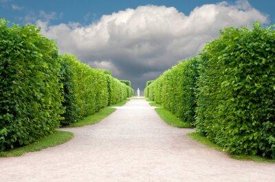Fototapeta Aleja w parku z drzewami topiary Dokładnie