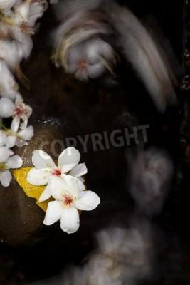 Fototapeta Aleurites Montana mix with Long exposure stream