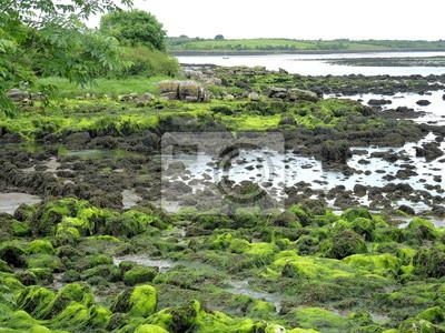 Fototapeta algue verte 2