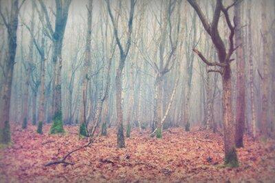 Fototapeta Angielski lasów w mglisty mglisty poranek