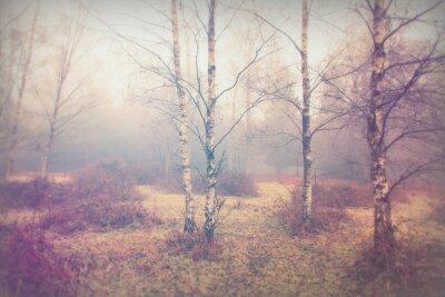Fototapeta Angielski lasy w mglisty mglisty poranek