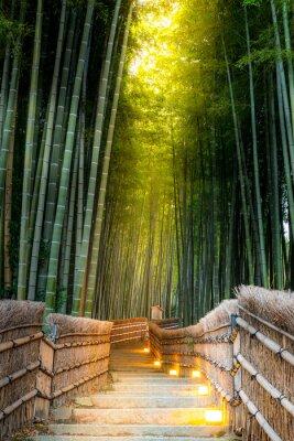 Fototapeta Arashiyama Bamboo Forest