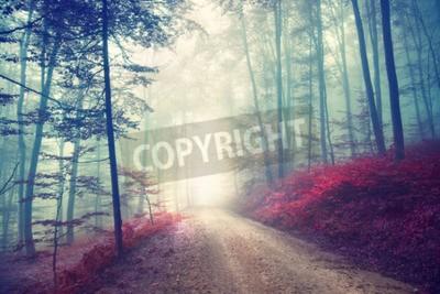 Fototapeta Archiwalne efektu kolorowego lasu jesienią drogi z światła fantazji. Zastosowano filtr Vintage.