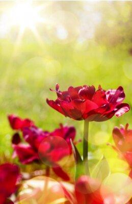 Fototapeta Art wiosny kwiatu tła