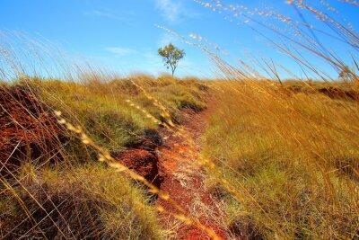 Fototapeta australijski outback