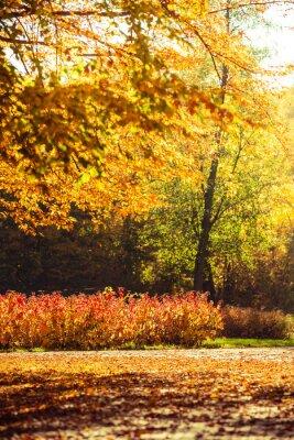 Fototapeta autumn dekoracje w parku