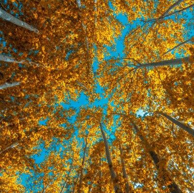 Fototapeta Autunm drzewa