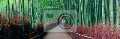 Fototapeta Bamboo Grove