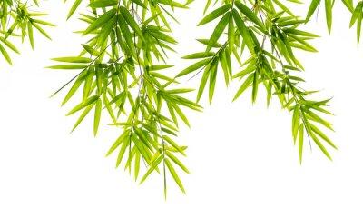 Fototapeta Bambus liści samodzielnie na białym tle