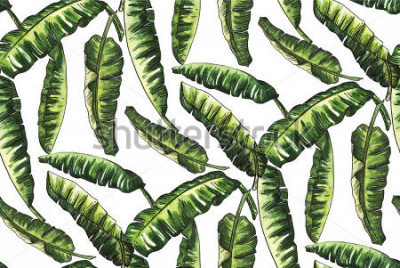 Fototapeta banan zieleń opuszcza akwarelę z kreskowym doodle wzorem ten sam mniej tapetowego moda rocznika Hawaii na białym tle