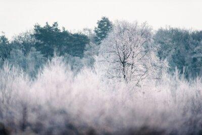 Fototapeta Bare drzewa z szron w zimie krajobraz.