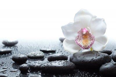 Fototapeta biała orchidea i mokre czarne kamienie