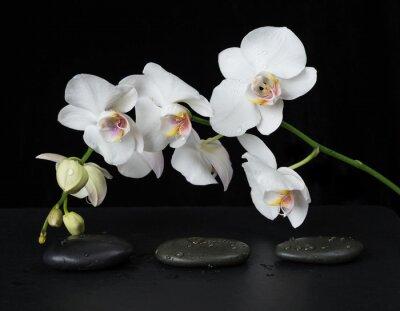 Fototapeta Biała Orchidea na czarnym tle