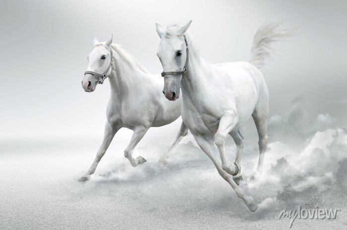 Fototapeta białe konie