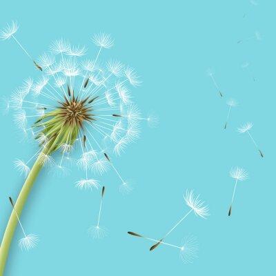 Fototapeta Biały dmuchawiec z pyłków samodzielnie