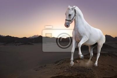 Biały koń i zachód słońca na pustyni