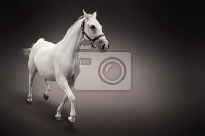 Biały Koń samodzielnie na czarny