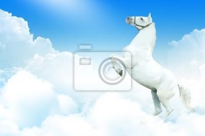 Biały koń w chmurach