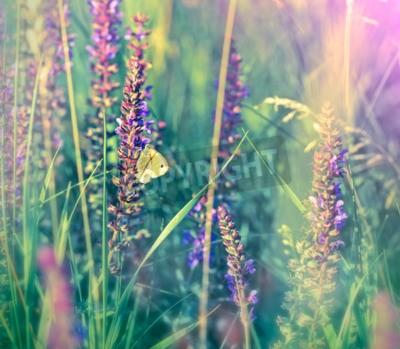 Fototapeta Biały motyl na purpurowy kwiat na łące