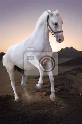 Biały na pustyni