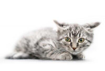 Bliska mały kotek