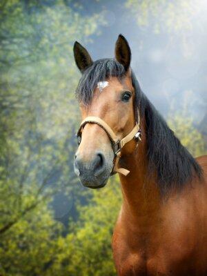 Fototapeta Brązowy koń w wiosennym krajobrazie
