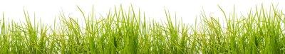 Fototapeta brins d'herbe, lubiący blanc