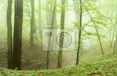 Fototapeta Buczyny latem po burzy