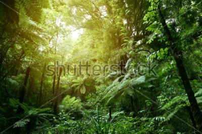 Fototapeta Bujne zielone liście w tropikalnej dżungli
