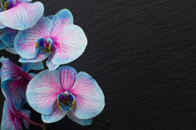 Fototapeta Bukiet fioletowych storczyków