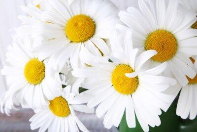 Fototapeta Bukiet kwiatów rumianku