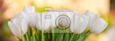 Fototapeta Bukiet kwitnące białe tulipany przeciwko ogrodzie wiosny tle