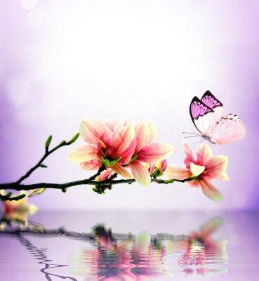Fototapeta Butterfly and flower magnolia