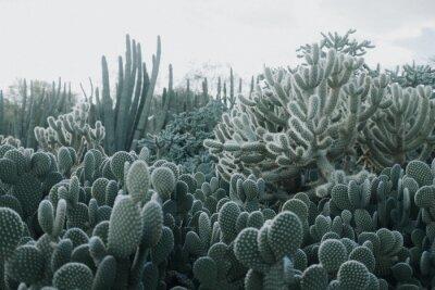 Fototapeta Cactus Garden