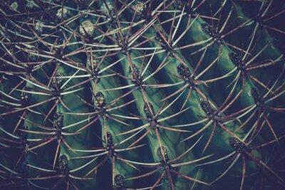 Fototapeta Cactus szczegóły makro bliska tle