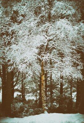Fototapeta Cairngorms, Highlands