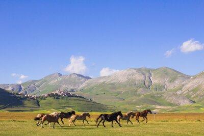 Fototapeta Cavalli al galoppo nei pressi di Castelluccio