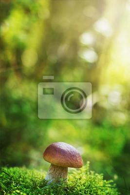 cep grzyb borowik lub w lesie jesienią mech