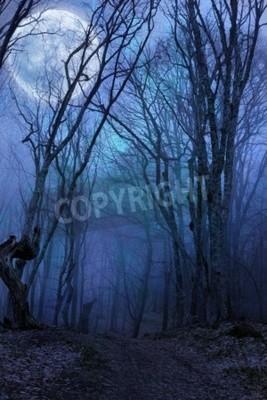 Fototapeta Ciemna noc pełni księżyca agaist lasu