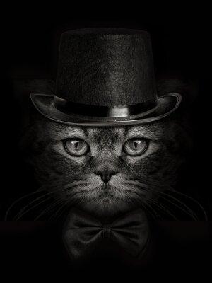 Fototapeta ciemny pysk kota bliska w kapelusz i krawat motyla