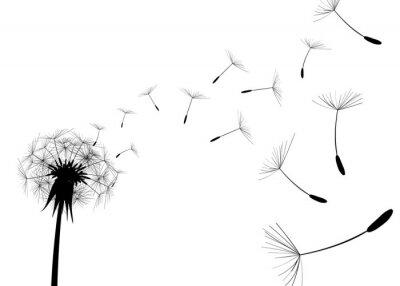 Fototapeta Cios Dandelion na białym tle