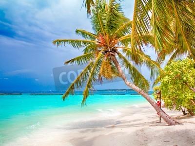 Fototapeta Coconut palm beach