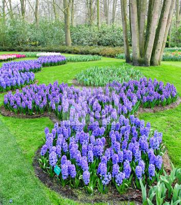 Colorfu kwiat w wiosna ogródzie. Kekenhof - Holandia