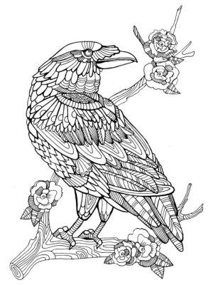 Crow Ptak Kolorowanka Dla Doroslych Wektorze Fototapeta