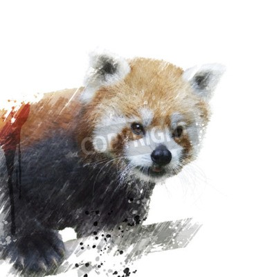 Fototapeta Cyfrowy obraz Red Panda